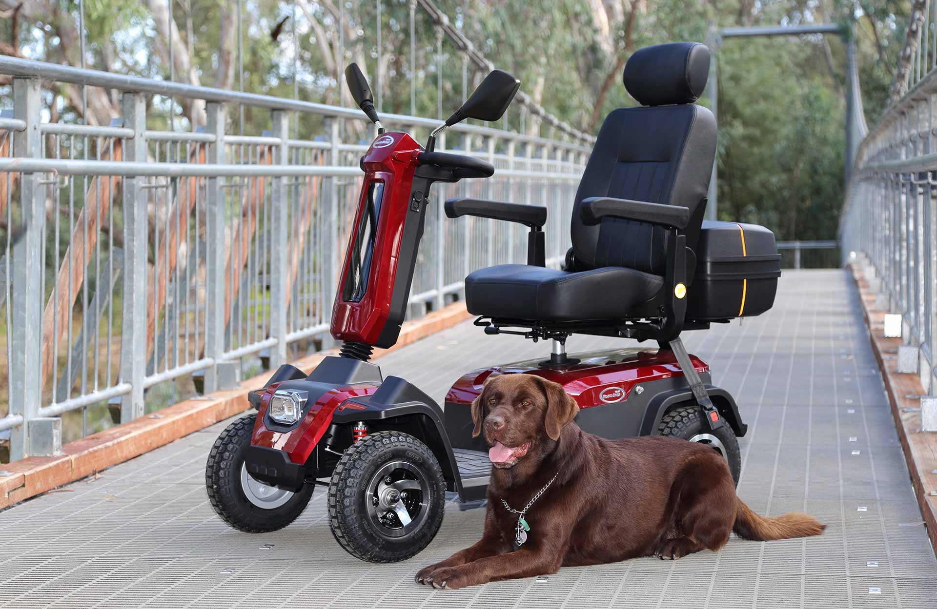 Friendly Dog and Scooter